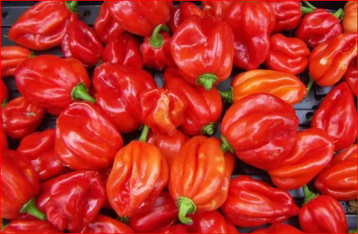 Eating Too Much Pepper May Lead To Male Infertility; See Others