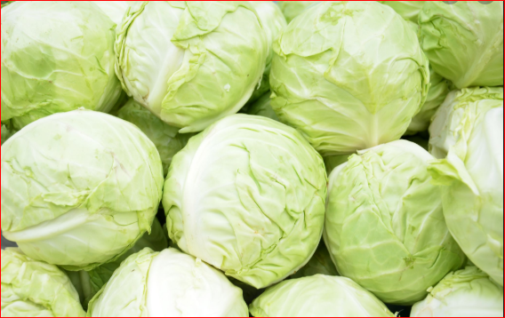 Cabbage For Your Delicacies Its Benefits And More