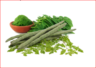 Moringa and Moringa Tea – Benefits, Risk And More