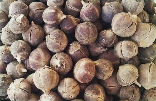 The Health Benefits And Side Effects Of Goron Tula