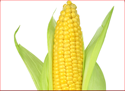 What Corn Does To Your Body That You Should Know
