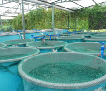 Episode 3: What You Must Consider Before Starting A Fish Farm