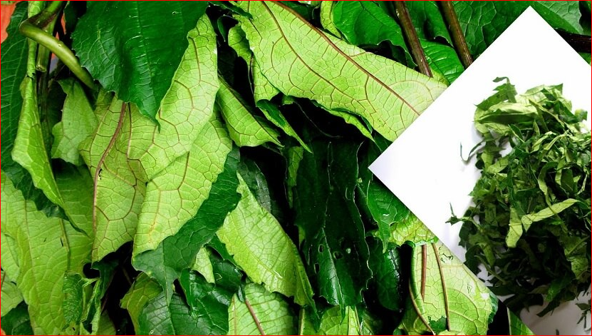 "Pumpkin Leaf ""Ugu"" For Hair and Skin Health; See Others"