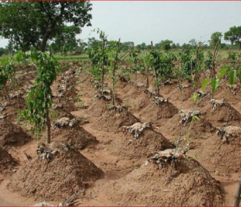 FMARD Trains Extension Agent On Yam Farming Practices
