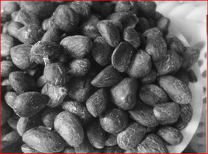 Palm Kernel Nut