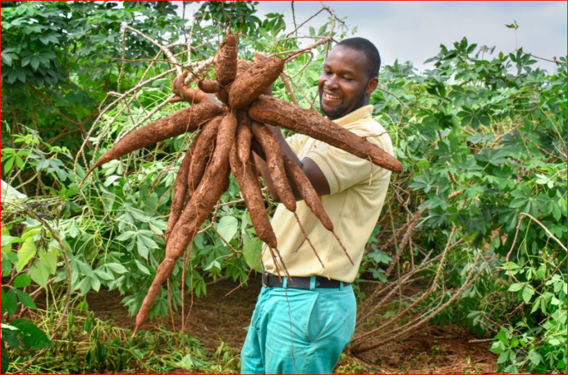 Private Sector Urged To Harness Cassava Value Chain Opportunities