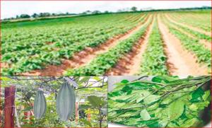 Commercial Pumpkin Farming In Nigeria; How Profitable?