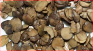 Side Effects of Locust Beans (Iru/Ogiri/Dawadawa)