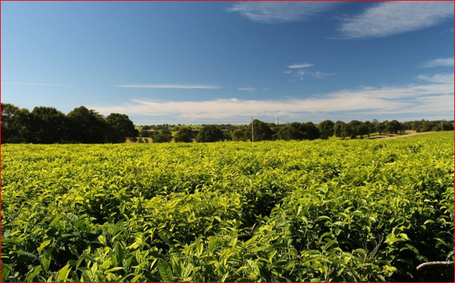 Which Farming Is Most Profitable In Nigeria?