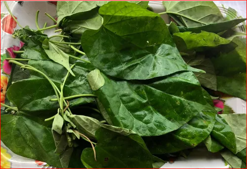Okazi Leaf Health Benefits And Its Effect On Pregnancy